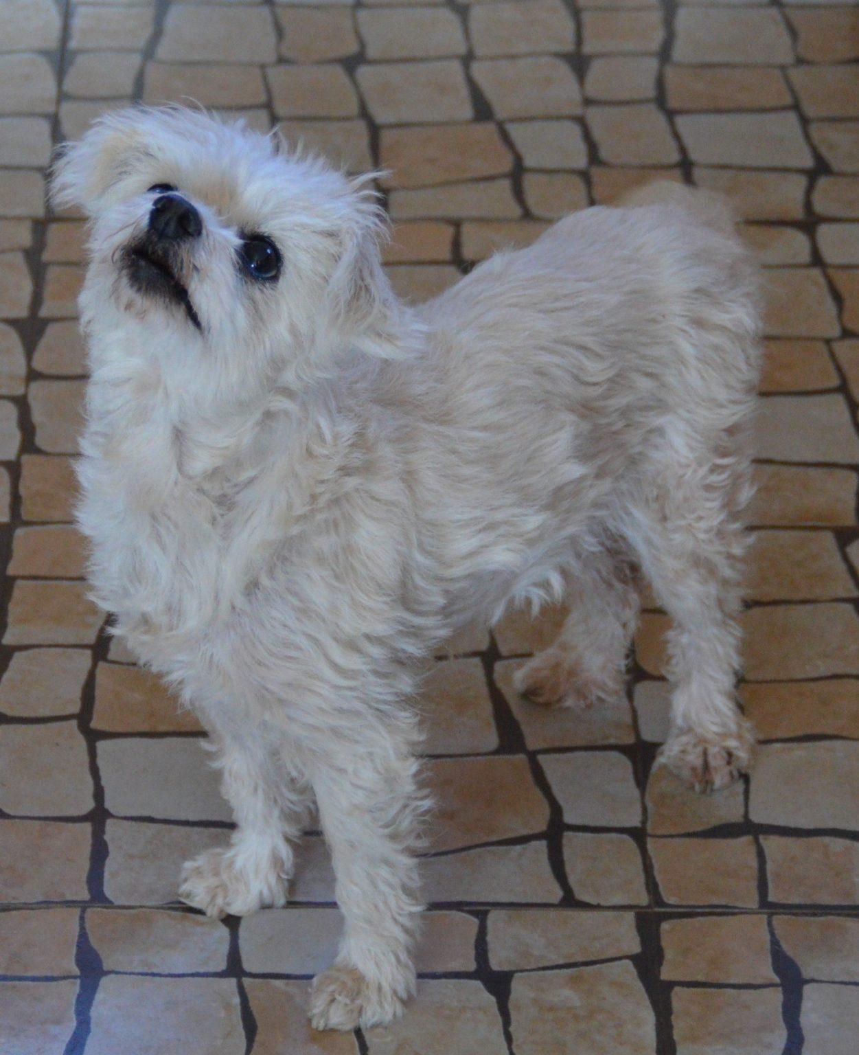 🐕 Schnuckelchen - Hunde aus Zentralportugal
